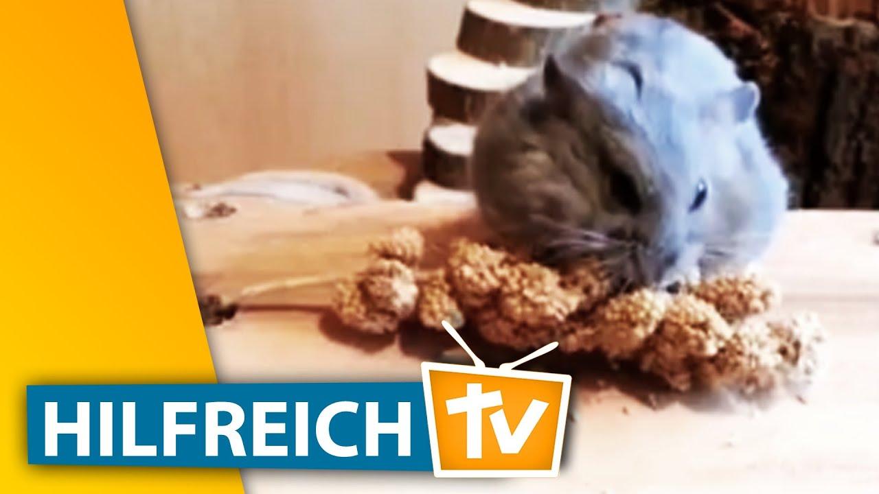 Hamsterspielzeug selber machen: Tolle Ideen für die Nager