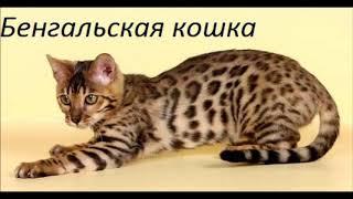 Какая ты порода кошек по знаку зодиака