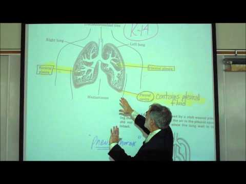 ANATOMY; RESPIRATORY SYSTEM; PART 2; Lower Tract; Trachea & Lungs by Professor Fink