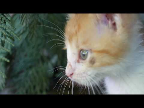 Kittens hiding in a tree 4k UHD 🐈 🐱Facile (Kevin MacLeod)