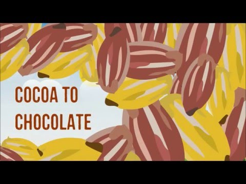 The Story of our Chocolate Journey