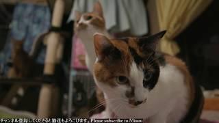 2018.4.8 ちゅーる 猫部屋ライブ映像   Cats & Kittens room 【Miaou みゃう】