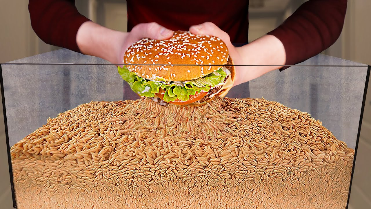 Download How Quickly The MAGGOTS Eat BURGER?