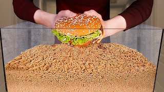 How Quickly The MAGGOTS Eat BURGER?