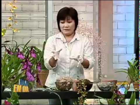 Aprenda a cuidar de orqu deas youtube - Cuidar orquideas en casa ...