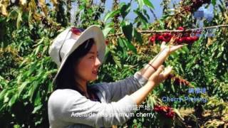 Live and Study in Adelaide - A Chinese International Student's Experience in South Australia