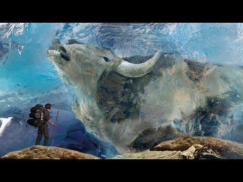 10 Most Amazing Creatures Found Frozen In Ice!