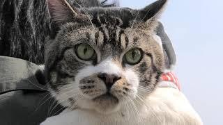 公園で出会ったいろんな動物をまじまじ見る猫リキちゃん☆野鳥に白鳥にどこからか犬!【リキちゃんねる・猫動画】Cat video きじしろねこのいる暮らし