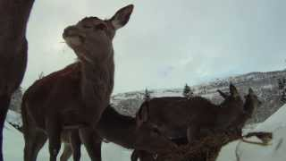 SØSKEN TIL EVIG TID_hjortescener som ikke er med i filmen