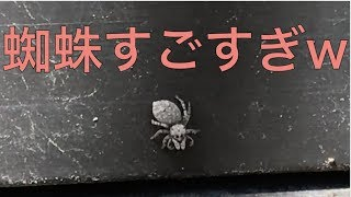 【驚愕のスピード】蜘蛛ってこの速さで動いて周り見えてるの??