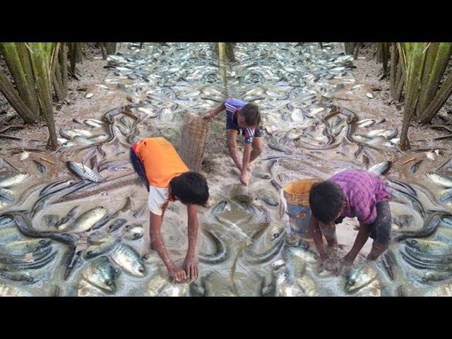 Amazing Children Catching Fish in Dry Season | How to fishing in dry season