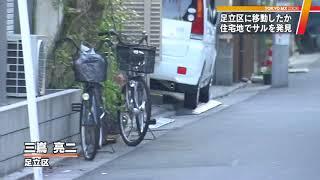 都内各地でサルの目撃情報が相次いでいます。11日午後、東京・足立区の...