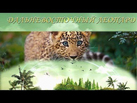 Животные красной книги фото амурского леопарда.