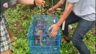 A Mother And 9 Babies At Nusaloka, BSD,  Rescued
