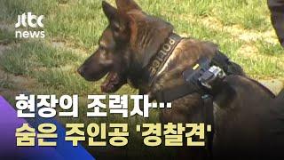 사건 현장엔 내가 있다! 경찰의 든든한 조력자, '경찰견' / JTBC 사건반장