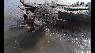 Đặt mồi dụ cá linh cực hay ở Miền Tây - Khám phá vùng quê
