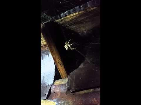 Scary Spider Prescott AZ