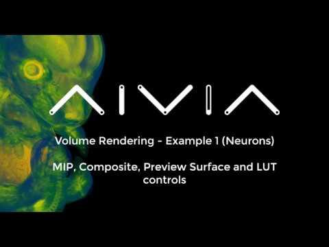 Aivia 7 - Volume Rendering Basics - Neurons