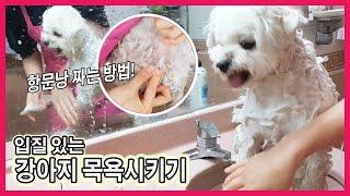 [모찌모찌롱] 강아지목욕 시키기 / 강아지항문낭짜는방법…