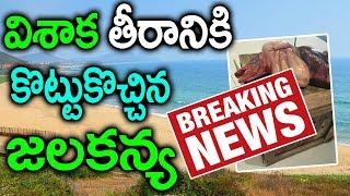 సముద్రతీరానికి కొట్టుకొచ్చిన జలకన్య వీడియో|| Whale came to Vishaka Beach Exclusive Video| Jalakanya thumbnail