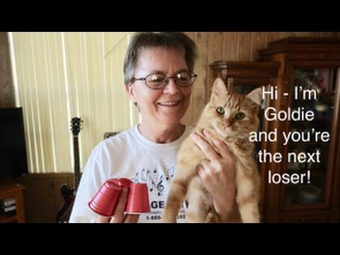Shell Game Cat Video Contest Can You Beat Goldie Playing The Shell Game? Cat Video Challenge