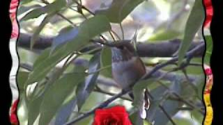 Pishon River Ministries ~ Robyn's Homemade Hummingbird Feeder
