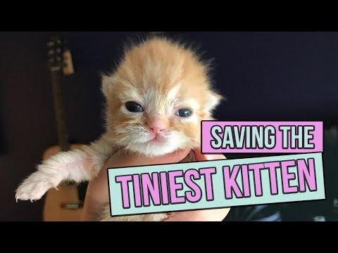Saving the Tiniest Newborn Kitten