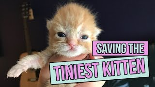 Saving the Tiniest Newborn Kitten