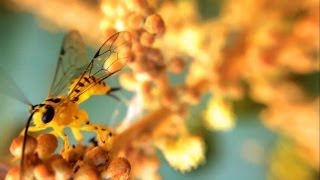 Macro Video shot with a Phone Camera(Shot with Sony Xperia S Specifications : 13 MP, FullHD, 100 ISO, white balance: Clouded, exposure value: 0, I attached external Magnetic Macro and fisheye ..., 2013-02-17T08:59:35.000Z)
