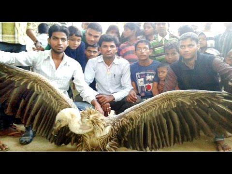 रामायण के जटायू को देखने के लिये उमड़ी लोगो की भीड़…! | Injured Jatayu Draws Huge Crowd In Chhapra