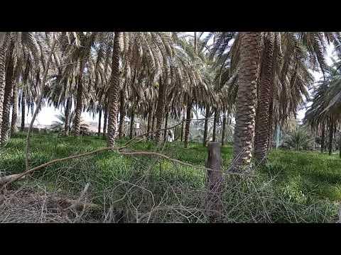 Oman Travel(8)