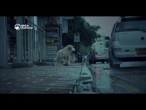 令人落淚的 SPCA 85th 週年影片