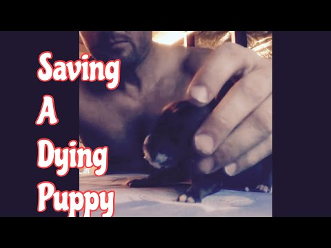 Saving A Dying Puppy