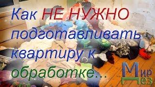 видео Уничтожение муравьев: обработка квартиры от муравьев в Москве и области