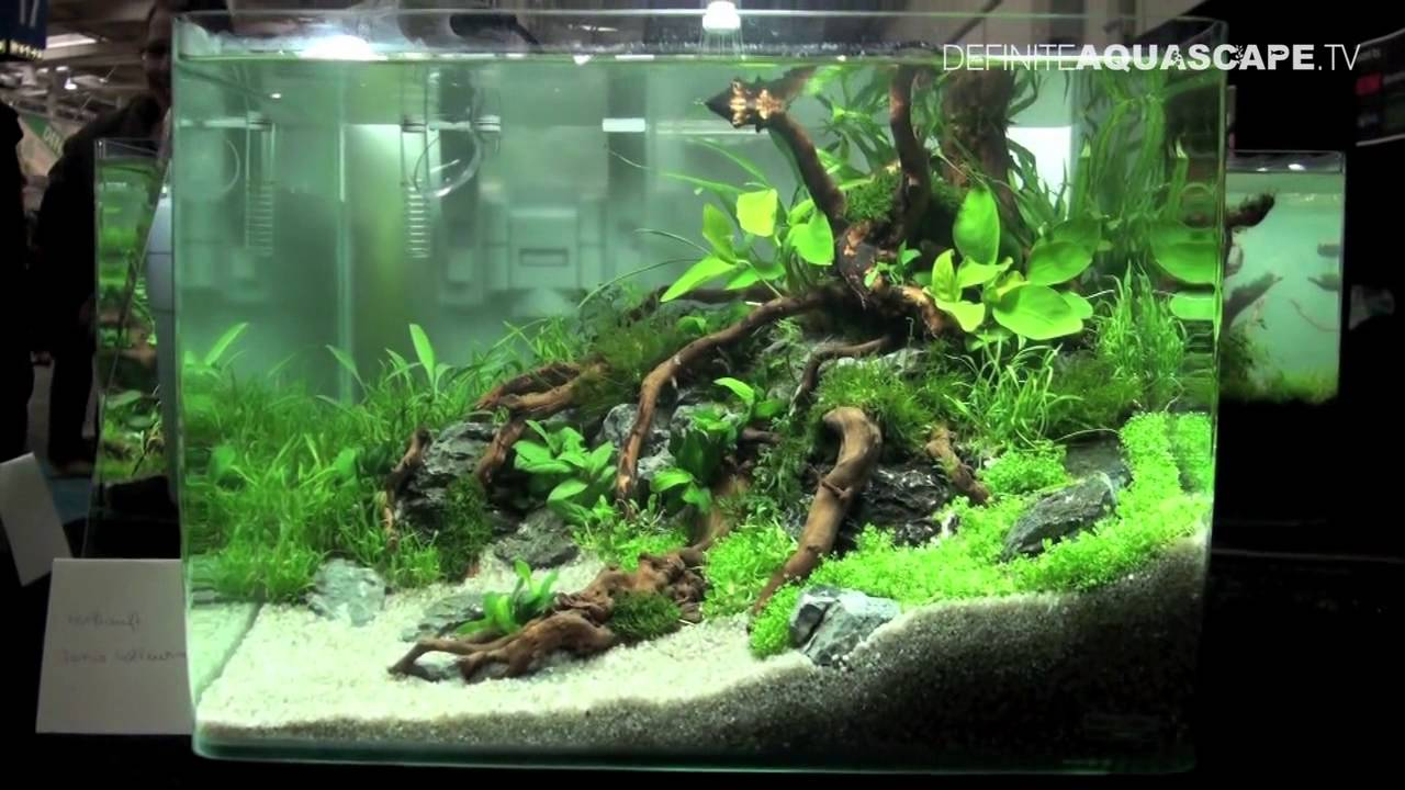 Aquascaping Qualifyings for The Art of