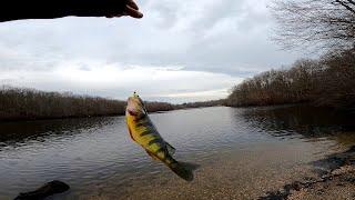 Long Island Winter Freshwater Fishing for Yellow Perch
