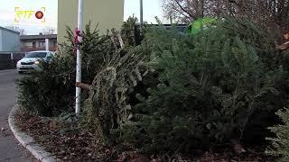 Christbaumentsorgung - Wohin mit dem Baum nach den Feiertagen?