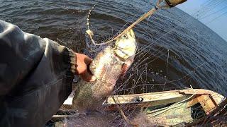 Рыбалка на Сети в пекло Верхогляд карась судак Дикие места