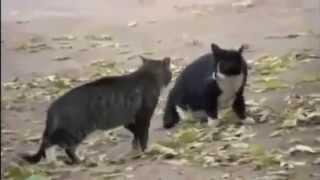 【まさかの展開】猫のケンカを犬が仲裁www https://youtu.be/PGvFj_m...