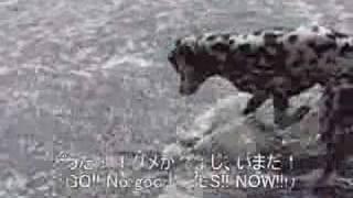 Dalmatian 『rescue Dog!!!』