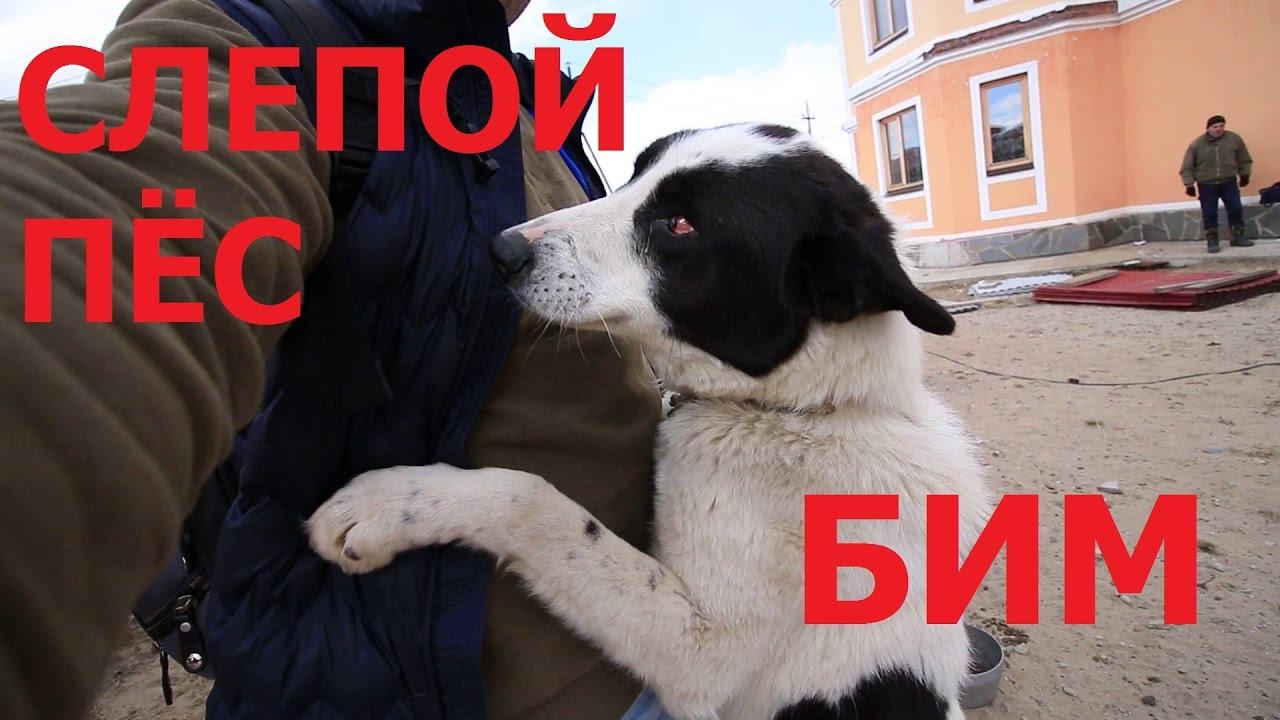 Как я приютил слепую собаку. Его зовут Бим.