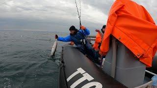 РЫБАЛКА В СУРОВОМ БАРЕНЦЕВОМ МОРЕ ЛЕТОМ FISHING IN THE HARSH BARENTS SEA IN SUMMER