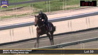 Lot 59 - 2YOs in Training Breezeup Thumbnail