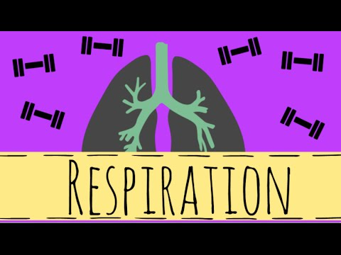 Respiration - Aerobic and Anaerobic Respiration - GCSE Biology