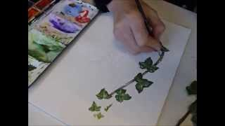 Botanical Illustration of Ivy by Lizzie Harper