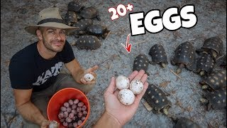 Searching for TORTOISE EGGS in the BACKYARD!!