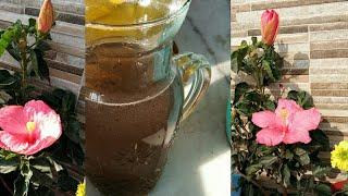 गुड़हल पर ज्यादा  फूल पाने हैं, नियमित रूप से प्रयोग करें यह फर्टिलाइजर,Get more flowers on hibiscus
