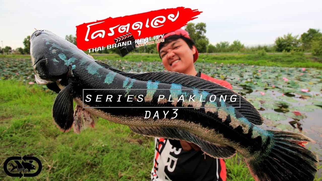 ชะโดคลองโครตดุกัด 6ZAXเต็มปาก#ท่องเที่ยว ผจญภัย ตกปลา คลอง fishing for snakehead  fish