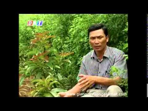 Quy trình kỹ thuật trồng và chăm sóc cho cây bơ