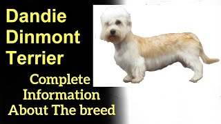 Dandie Dinmont Terrier  Pros and Cons, Price, How to choose, Facts, Care, History